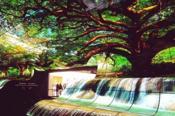 Το LG OLED Falls αποτελείται από 260 LG OLED εύκαμπτες open-frame επαγγελματικές οθόνες, προσφέροντας μια μοναδική εμπειρία των φυσικών θαυμάτων.